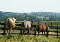Charlottesville Va Horse Farms for Sale